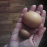нестандартное куриное яйцо