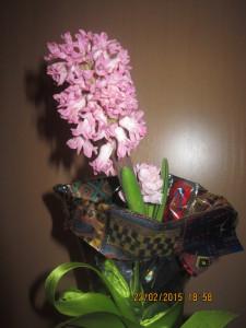 цветущий гиацинт